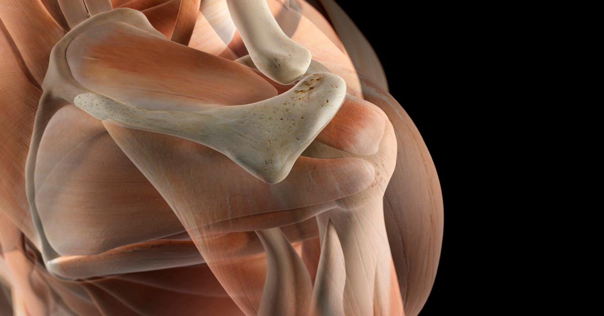 The Fundamental Concepts in Musculoskeletal Ultrasound